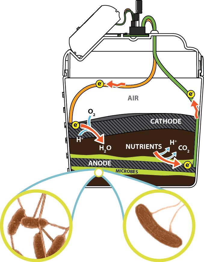 mudwatt diagram mudwatt microbial fuel cell kit