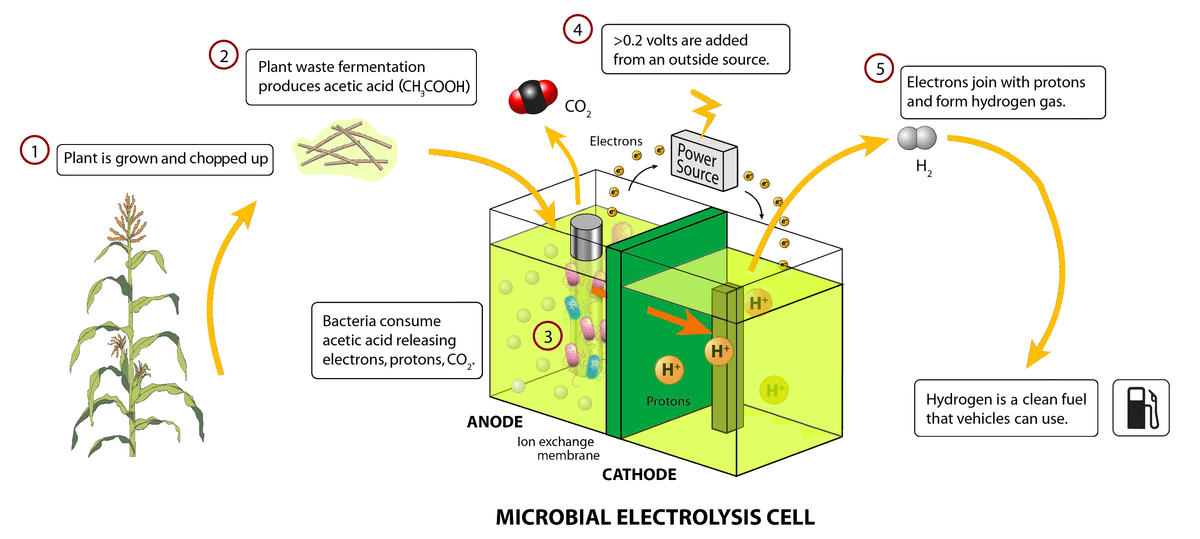 Biological Fuel Cells (BFCs) and the Bio-production of Hydrogen